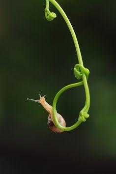 Snail by Bayu Sanjaya on 500px