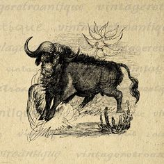Printable Wild Buffalo Graphic Image by VintageRetroAntique