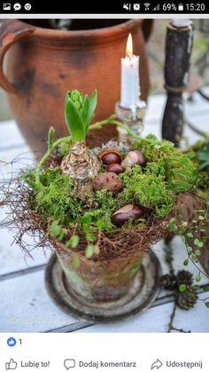 27 Most Beautiful Winter Garden Ideas That You Will Miss Now Garden Care, Pot Pourri, Garden Bulbs, Spring Bulbs, Christmas Flowers, Gardening For Beginners, Winter Garden, Garden Styles, Natural Materials