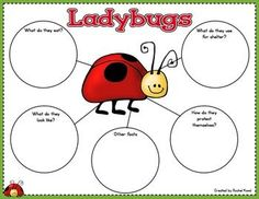 Ladybug Unit***Updated 2016***  Ladybugs always bring a lot of excitement into the classroom! Your class will have fun learning and discovering all about ladybugs with this unit! Students create a lap book they can bring home to show to their families and friends and explain what they have learned. Unit includes observation journal, vocabulary, life cycle, ladybug anatomy, and much more!  www.teacherspayte...