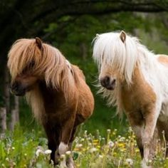 Adorable ponies brunette and blonde