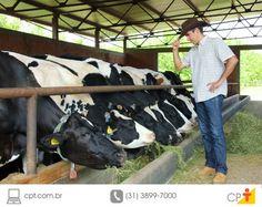 Gado leiteiro morre devido à tripanossomose Cow Shed Design, Gado Leiteiro, Owl Life, Goat Shed, Farm H, Cattle Farming, Goats, Portal, Animales