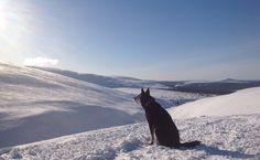 Henkeäsalpaavan kauniit maisemat Pallaksella. Breathtaking view! Lapinporokoira - Lapponian herder