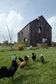 """Maison """"cubique"""", toit bien présent, bardage bois brûlé, paysage simple et p'tites poulettes ! A voir !"""