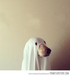 funny dog ghost Halloween costume