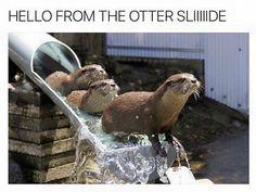 Adele + Puns + Otters = Yes