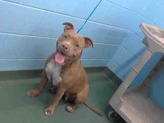 PUMPKIN...FOUND IN MANATEE COUNTY PALMETTO, FLORIDA...PetHarbor.com: Animal Shelter adopt a pet; dogs, cats, puppies, kittens! Humane Society, SPCA. Lost & Found.