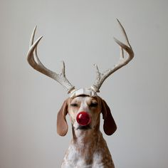 THIS WILD IDEA :Maddie the Coonhound