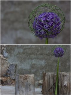 ~~   caged allium