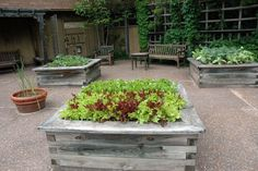 Horticultural Therapy Demonstration Garden - NC Botanical Garden Raised Beds, Native Plants, Lettuce,