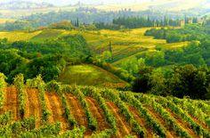 Italy - Tuscany - Rolling Vinyards