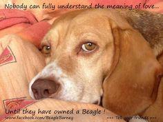 ***Puppy love, beagle style!