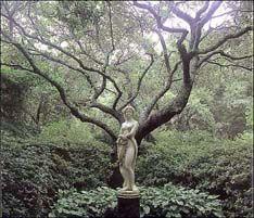 Elizabethan Gardens in Manteo Garden Deco, Garden Art, Garden Design, Garden Of Eden, Love Garden, Gothic Garden, Southern Gothic, Enchanted Garden, Gardens