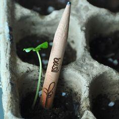Rostoucí tužka SPROUT