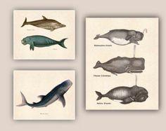 Marine Mammals prints, Whales Print, whale shark, dolphin, school Wall Decor, educational, Nautical art, beach cottage decor,