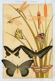 stilllifequickheart:  M. P. Verneuil Butterflies 1897