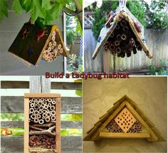 Omg a ladybug house shut up.... Doing this for sure