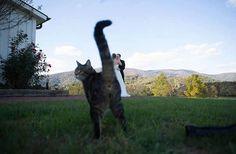 11 chats farceurs qui ne peuvent pas se retenir de gâcher vos photos
