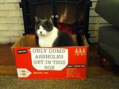 The cat who never learned to read. | 24 Cats Who Realize They've Made A Huge Mistake