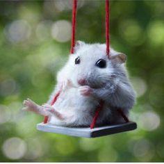 Hamster on a swing!!