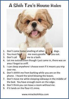 Shih Tzu House Rules at Miracle Shih Tzu http://miracleshihtzu.com/dog-quotes.html