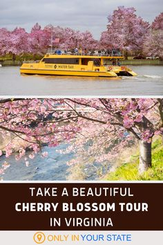 Take a beautiful tour of Virginia's Cherry Blossom trees by boat! This unique adventure on the Potomac River is perfect for a day trip and ideal for family-friendly spring fun. Blossom Trees, Cherry Blossom, Best Bucket List, Spring Break Vacations, Potomac River, Hidden Beach, Natural Wonders, Day Trips, Virginia