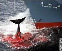 killing a whale poem
