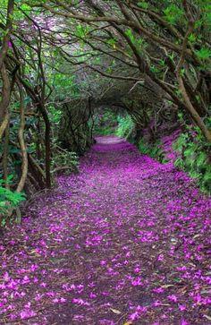 Ireland  photo via  comerviajaramar.com