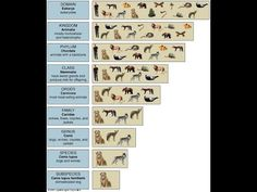 Taxonomic Hierarchy L 3 Branches Of Biology, Photo Wall, Photograph