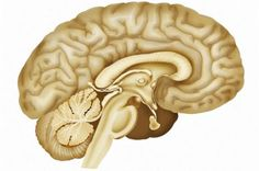 http://www.neuroscientistnews.com/research-news/study-stimulates-human-amygdala-first-time-breathing-loss-recorded