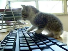 cute kitten 1 Daily Awww: Cats keep us entertained without even trying (33 photos)