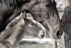 Mother&Foal « Heart of a Horse