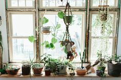 The dining room windowsill of Emily Katz's home in Portland, Oregon via Gardenista