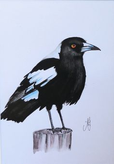 Magpie #1 Watercolour and ink - 30cm x 21cm - $100 Bird Illustration, Watercolor Illustration, Bird Paintings, Botanical Tattoo, Crows Ravens, Bird Wings, Australian Birds, Birdcages, Animal Totems