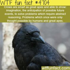 I actually named a character in one of my books Crow. And that was it, he was smarter than most of them, but still defeated by Raven.