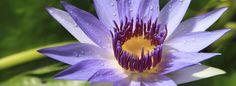 Avec plus de 12 000 espèces en culture, le Jardin Botanique du Montet est un véritable musée des plantes qui témoigne de l'extraordinaire richesse du monde végétal.