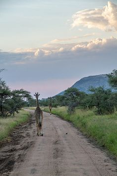 Take a drive from South Africa to the Serengeti.