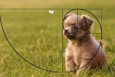 This photo is example of rules of thirds because the puppy is on the edge of the photo and the middle Rule Of Thirds Photography, Photography Rules, Still Photography, Vintage Photography, Nature Photography, Digital Photography, Travel Photography, Rules Of Composition, Photo Composition