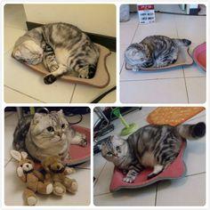 進擊的貓抓板,各種款式比一比 | 寵物滔客誌:與您 Talk 寵物趣味事 | Pet.Talk.Tw 線上數位雜誌 | 糖橘子
