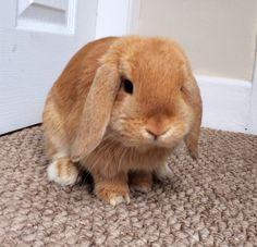 Bunny Rocco