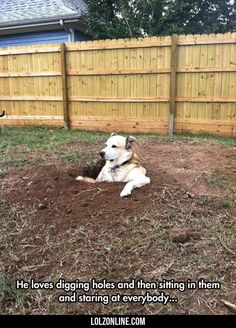 He Loves Digging Holes #lol #haha #funny