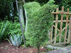 árbol con forma muy curiosa y misteriosa