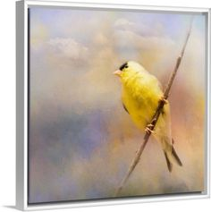 •When you need answers, look up. For that is where faith, hope, encouragement, inspiration and strength live.• Product Description: Yellow Goldfinch Bird art by Jai Johnson on canvas in floater frame