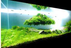 Dicas de Como Fazer Aquapaisagismo