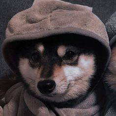 Funny Profile Pictures, Matching Profile Pictures, Pictures To Draw, Couples Anime, Anime Couples Drawings, Cute Baby Puppies, Dog Icon, Cute Cats And Dogs, Anime Best Friends
