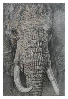 elefant-zeichnung