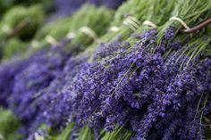 Lavender Festival  Castle Farm, Shoreham