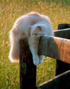 Cats: Just hanging around . . .