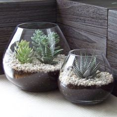Indoor and outdoor succulent gardens are incredibly easy to take care of, so even if you don't have the greenest thumb, you can still keep a thriving