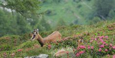 Val de Rhemes - Fauna, Hiking by Jean-Baptiste on www.explore-share.com